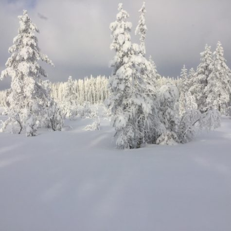 Vinteridyll ved 14.tj